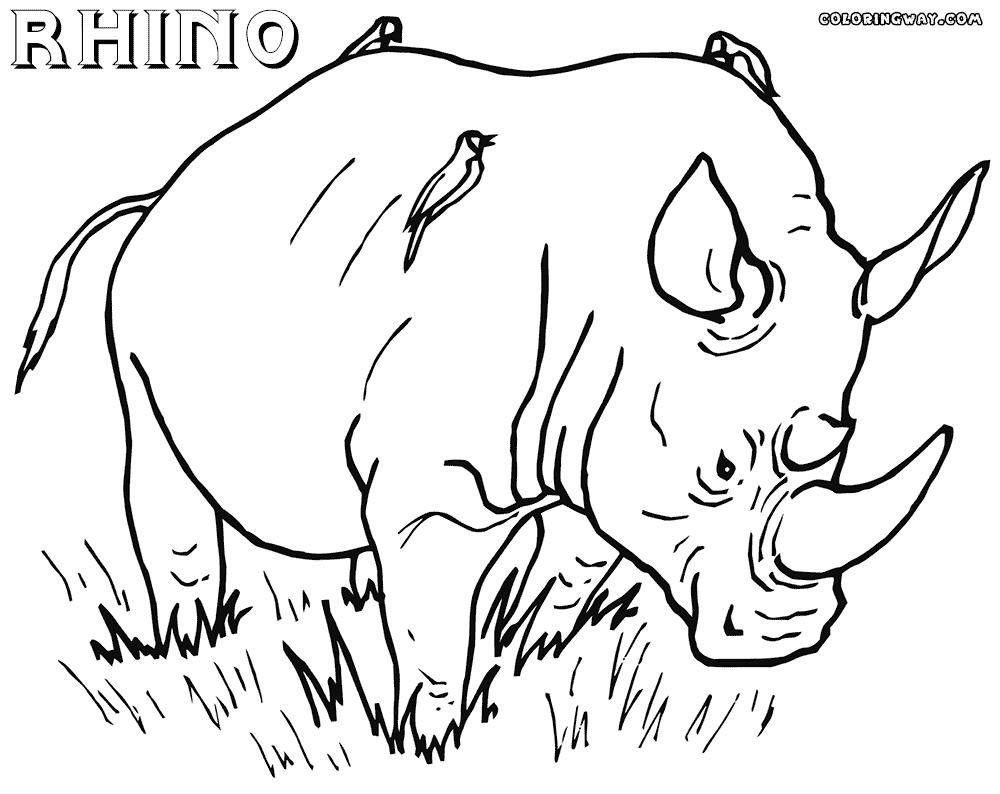 1000x794 Indian Rhino Coloring Page Free Printable Pages Lively