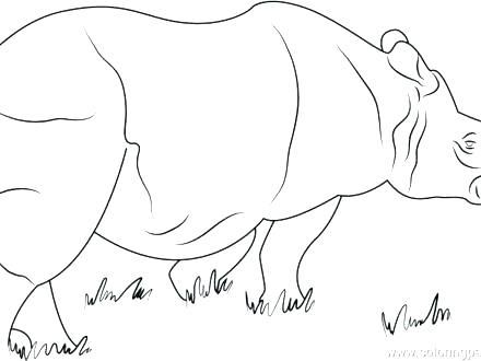 440x330 Rhino Coloring Page Drawing Rhino Coloring Page Rhinoceros Stock
