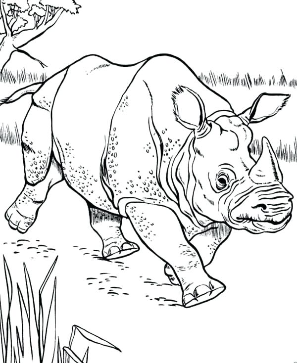 600x734 Rhino Coloring Pages Rhino Sketch Of Rhino Coloring Pages White