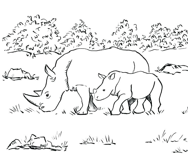 760x641 Rhinoceros Coloring Page