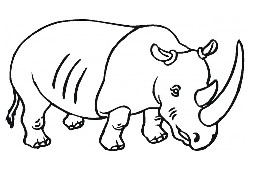 1050x706 Free Printable Rhinoceros Coloring Pages For Kids