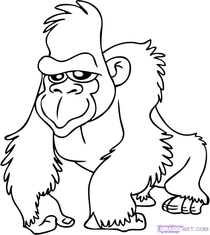 736x826 Safari Animals Coloring Pages Printable Jungle Animal Coloring