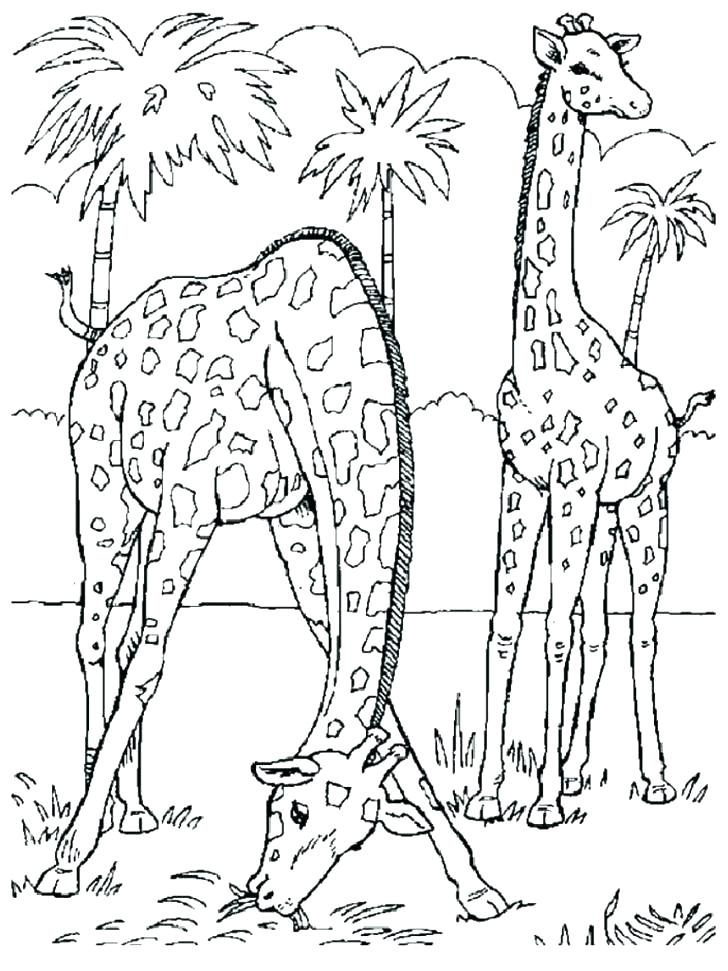 728x971 Wildlife Coloring Pages Animal Coloring Pages To Print Safari