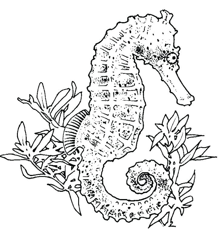736x768 Seahorse Coloring Page Realistic Seahorse Coloring Page Baby