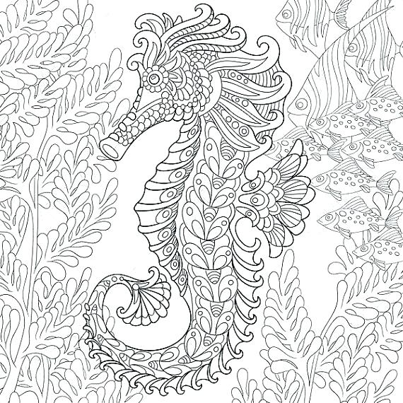 570x570 Seahorse Coloring Pages Mermaid Seahorse Coloring Pages Adult