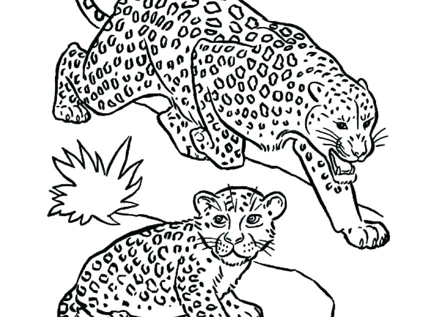 879x635 Baby Seal Coloring Pages Leopard Coloring Pages Baby Snow Leopard