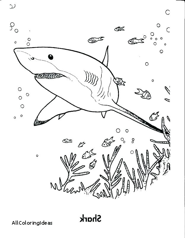 624x803 Shark Coloring Pages To Print Printable Shark Coloring Pages