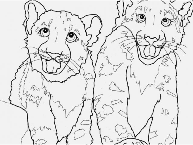 640x480 Coloring Snow Leopard Graphic Babies Snow Leopard Coloring Page