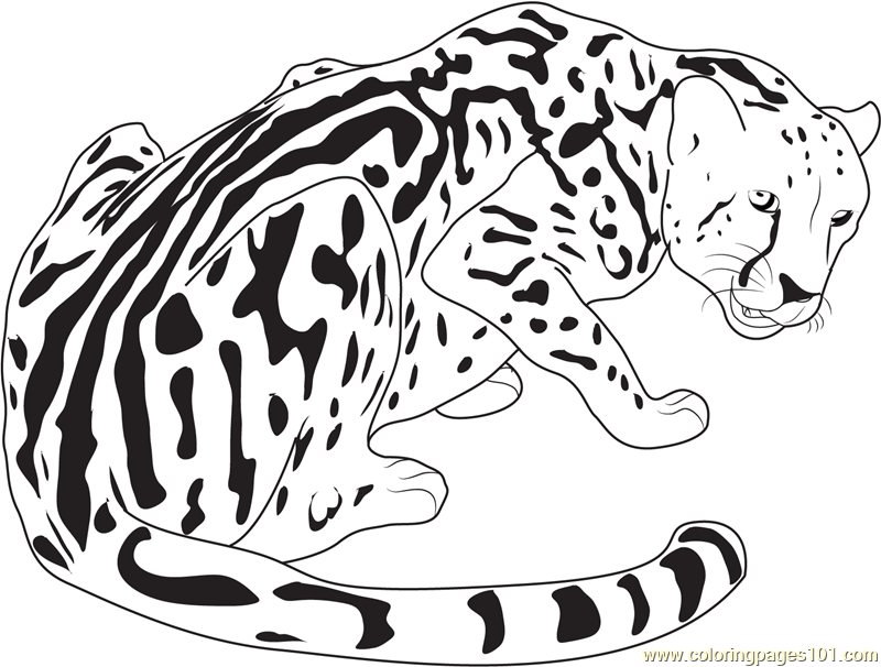 800x606 King Cheetah Coloring Page