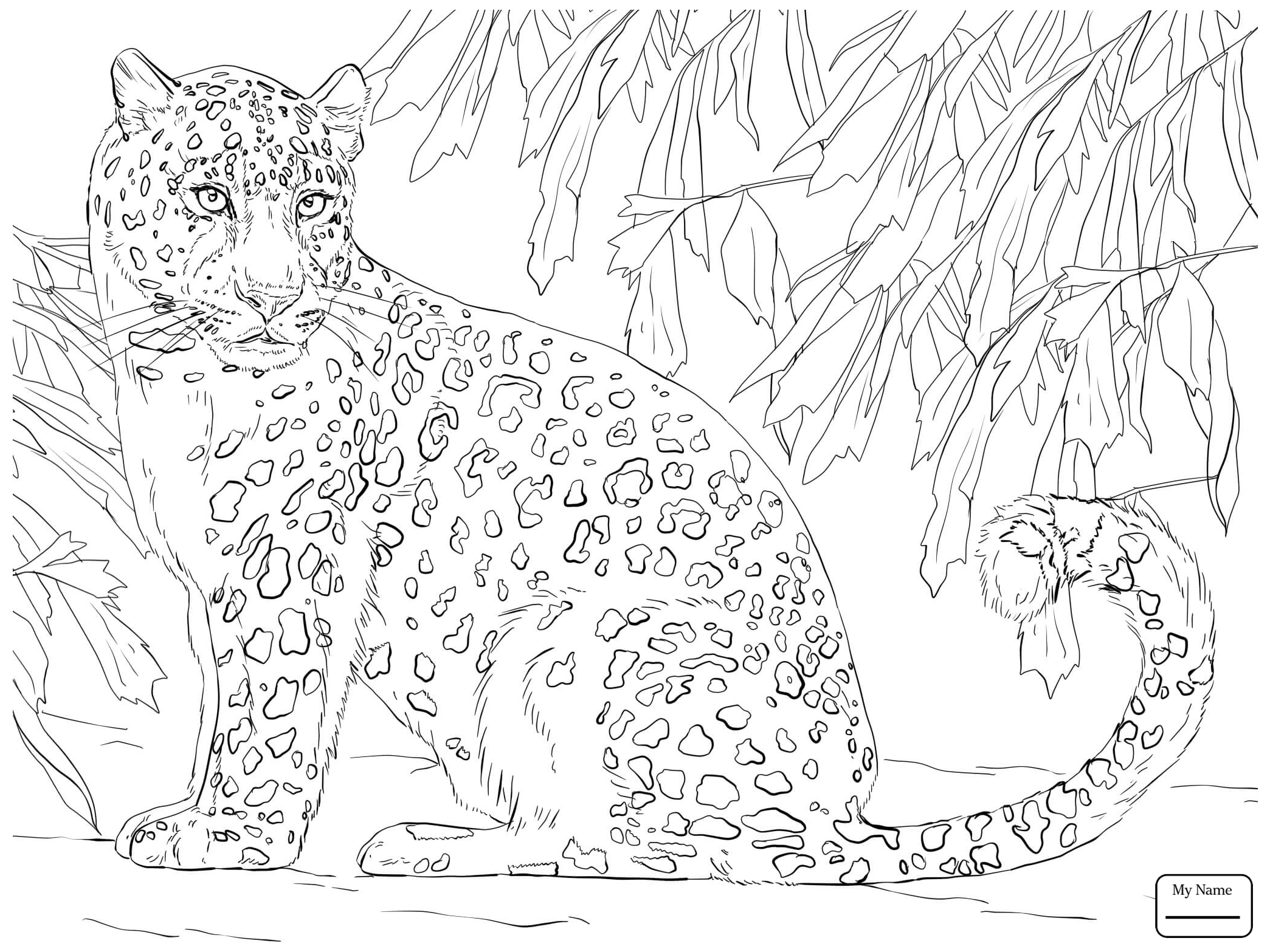 2089x1567 Shrewd Animal Jam Coloring Pages Snow Leopard