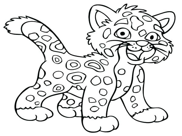 600x450 Snow Leopard Coloring Pages Cheetah Coloring Pictures Little Baby