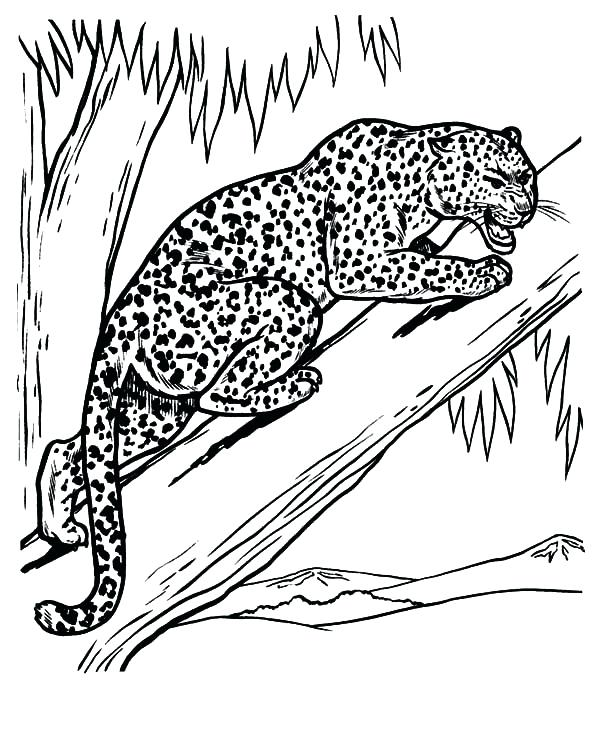 600x734 Snow Leopard Coloring Pages Leopard Feeling Threaten Coloring