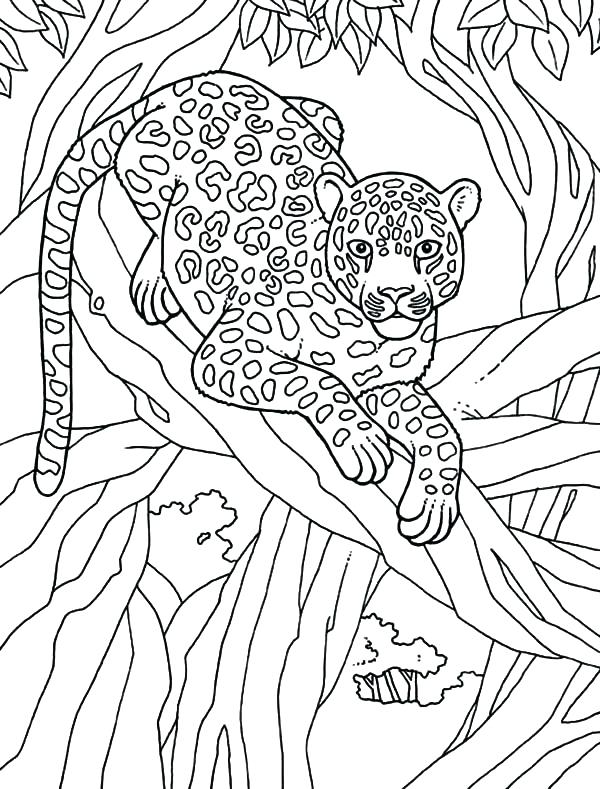 Baby Snow Leopard Coloring Pages At Getdrawings Com Free For