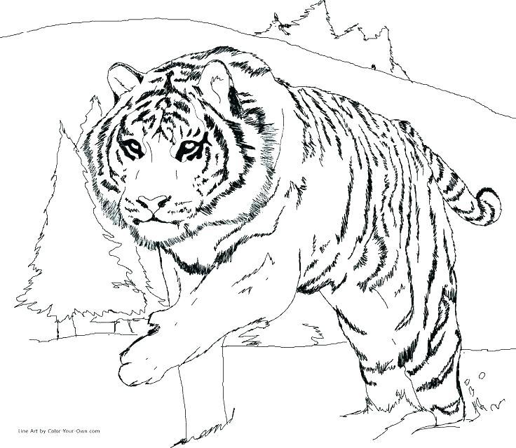 736x639 Snow Leopard Coloring Pages Snow Leopard Coloring Pages Leopard