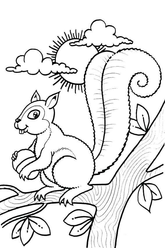 567x850 Coloring Pages Of Squirrels Baby Squirrel Coloring Pages Free