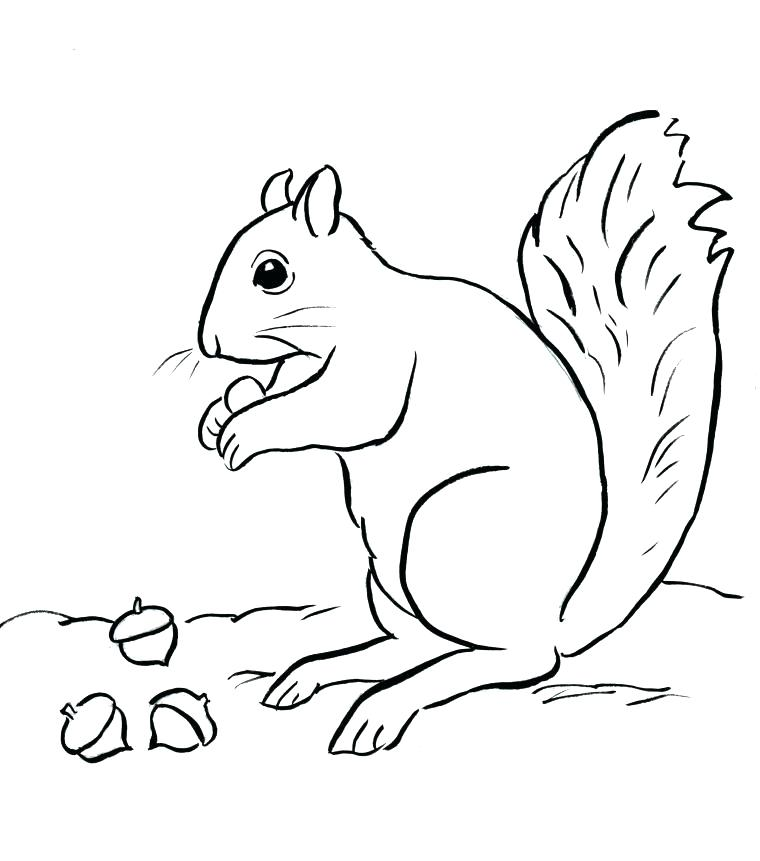760x861 Coloring Pages Of Squirrels Two Baby Squirrel Coloring Page
