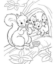 236x270 Look! The Mommy Is Feeding Her Babies Squirrels With Nuts What