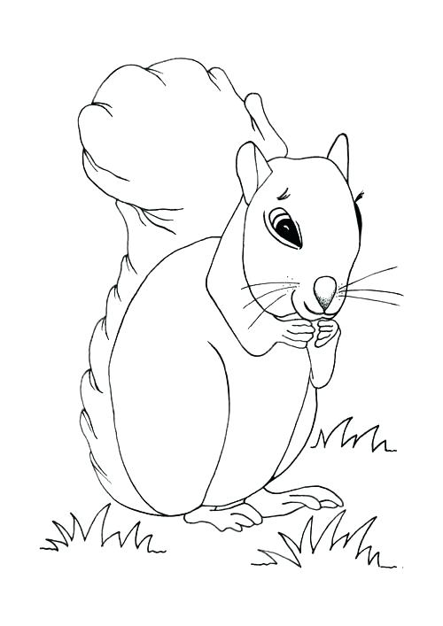 500x707 Squirrel Coloring Pages Coloring Pages Of Squirrels Cute Baby