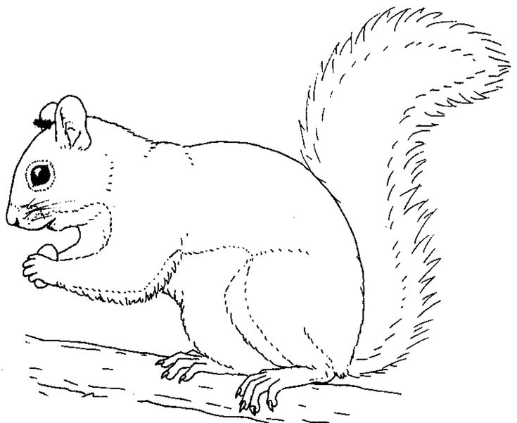 735x601 Best Squirrels To Color Images On Coloring Books