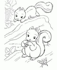 236x289 Wild Animal Coloring Pages Squirrel Family Coloring Page