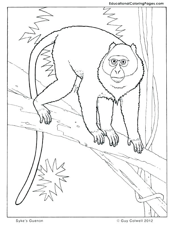 612x792 Squirrel Coloring Pages