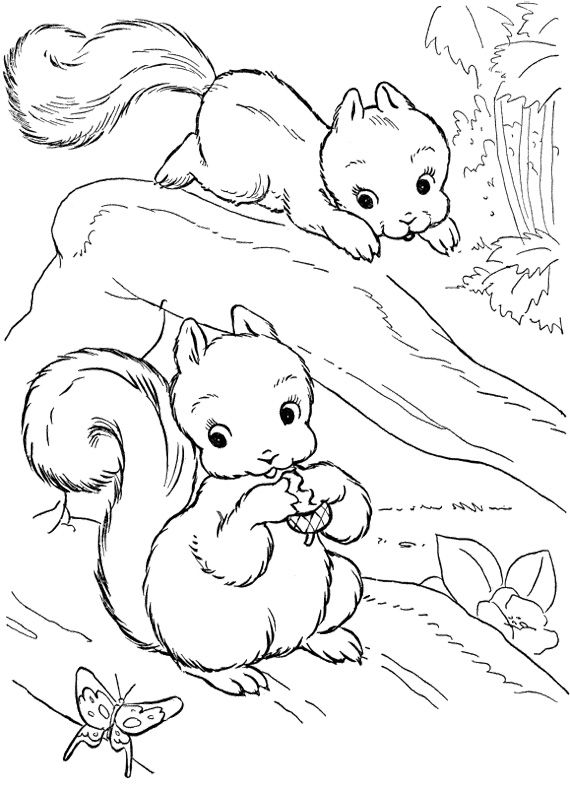 570x789 Baby Squirrel Coloring Pages Pattern Design Ideas