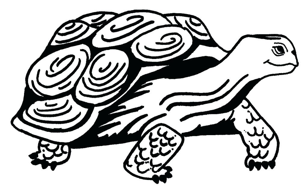 1024x638 Cute Baby Turtle Coloring Pages Swimming Page Free Printable Baby