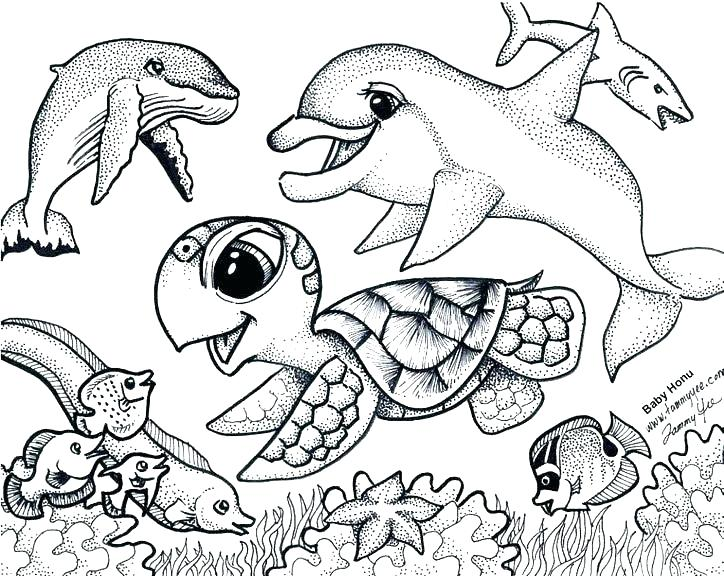 724x576 Cute Baby Turtle Coloring Pages Turtle Coloring Pages Free Ninja