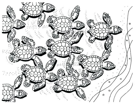 570x440 Sea Turtle Coloring Page
