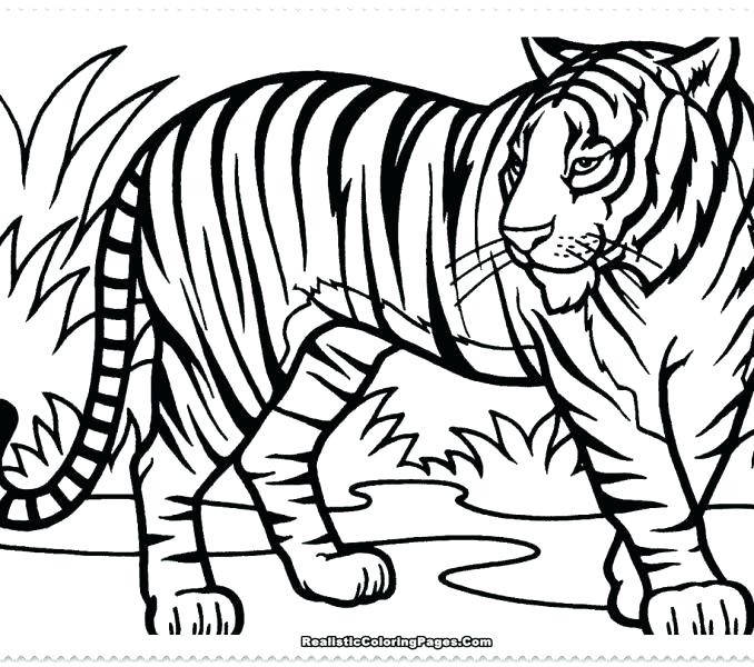 678x600 Printable White Tiger Pictures Kids Coloring Free Printable Tiger