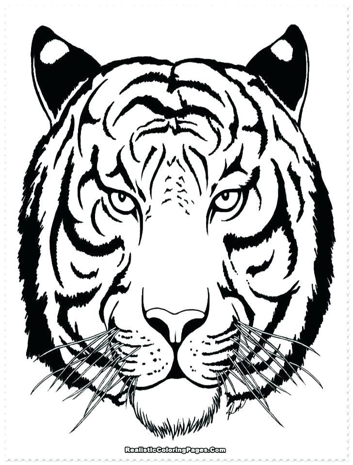 728x958 Tiger Face Coloring Pages Baby White Tiger Face Coloring Page