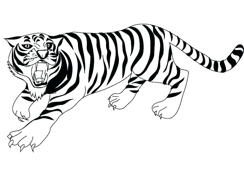842x595 Baby Tiger Coloring Pages Baby Tiger Coloring Cute Tiger Coloring