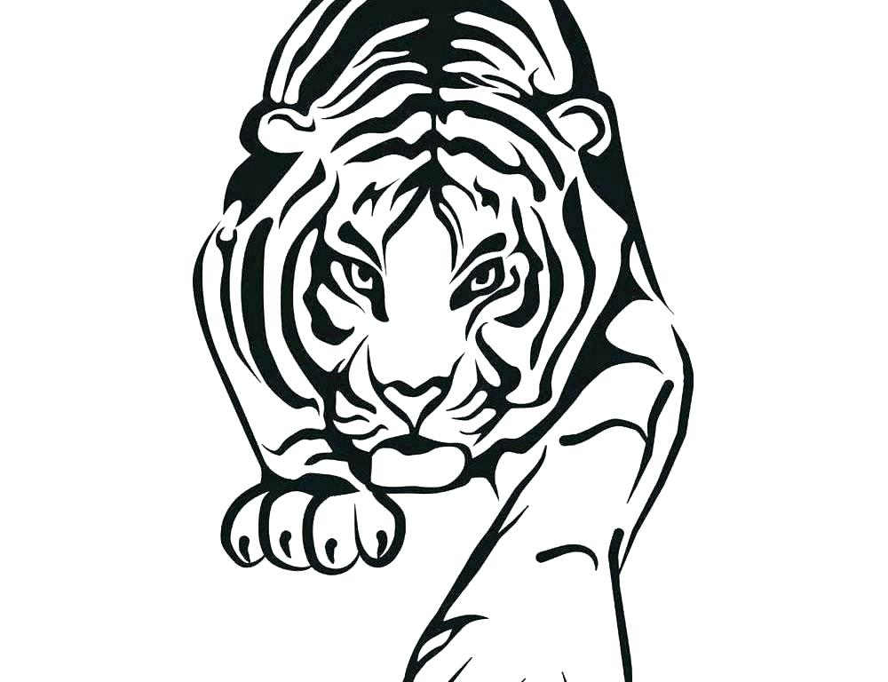 1000x768 Baby Tiger Coloring Pages