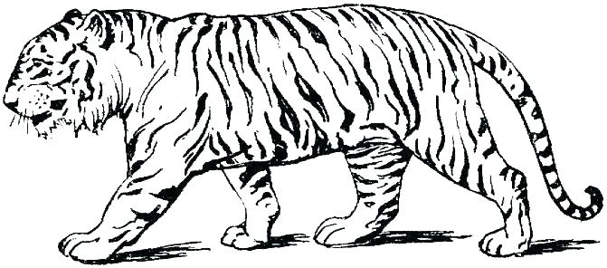 671x296 Baby Tiger Coloring Pages Printable Tiger Coloring Pages Tiger