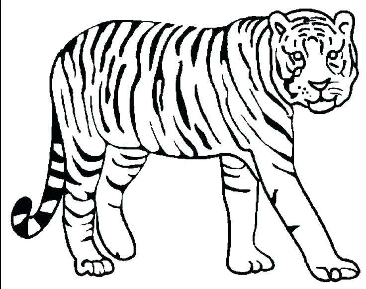 736x581 Baby Tiger Coloring Pages Tiger Pictures To Color White Tiger