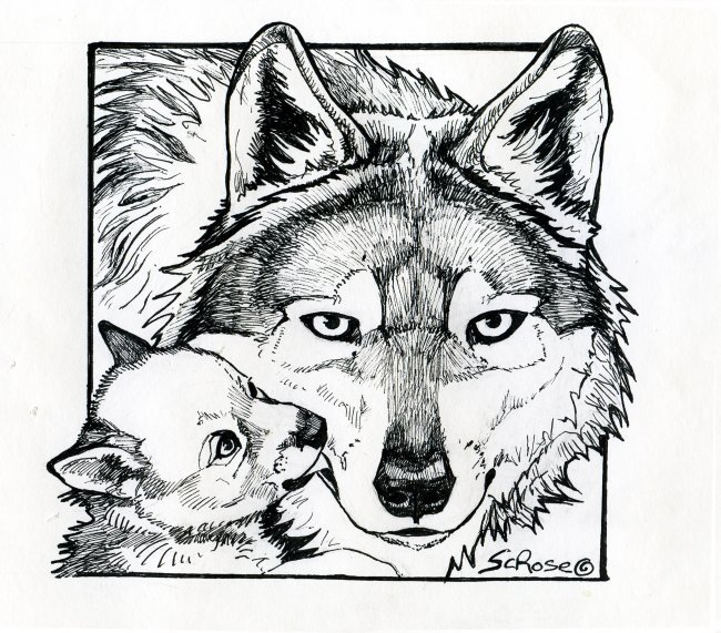 20+ Free Printable Wolf Coloring Pages - EverFreeColoring.com | 571x650
