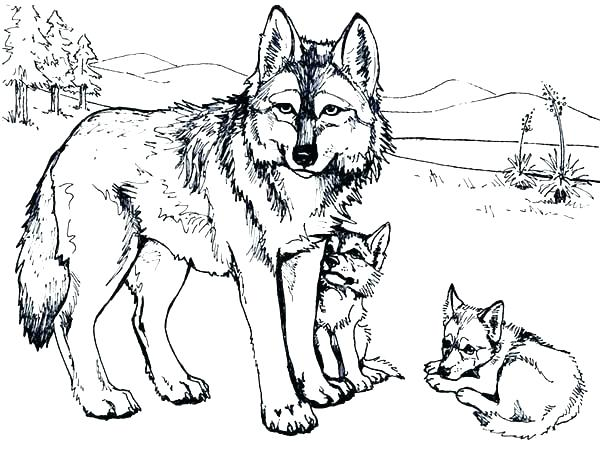 600x458 Coloring Pages Of Wolves Baby Wolf Coloring Pages Wolf Coloring