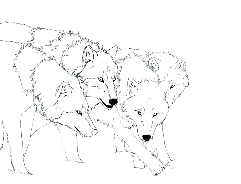 921x704 Cute Wolf Coloring Pages Free Printable Wolf Coloring Pages