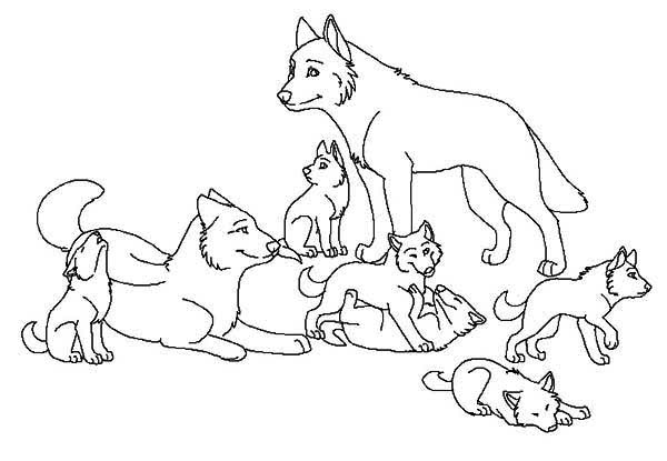 600x415 Babies Wolf Coloring Page