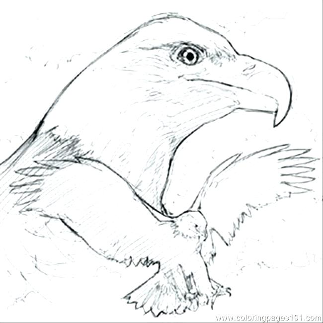 image regarding Eagle Printable named Bald Eagle Coloring Internet pages Printable at