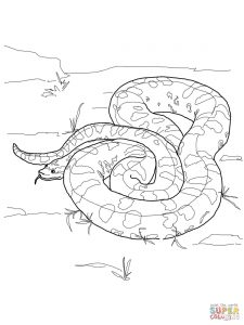 225x300 Ball Python Download Coloring Page