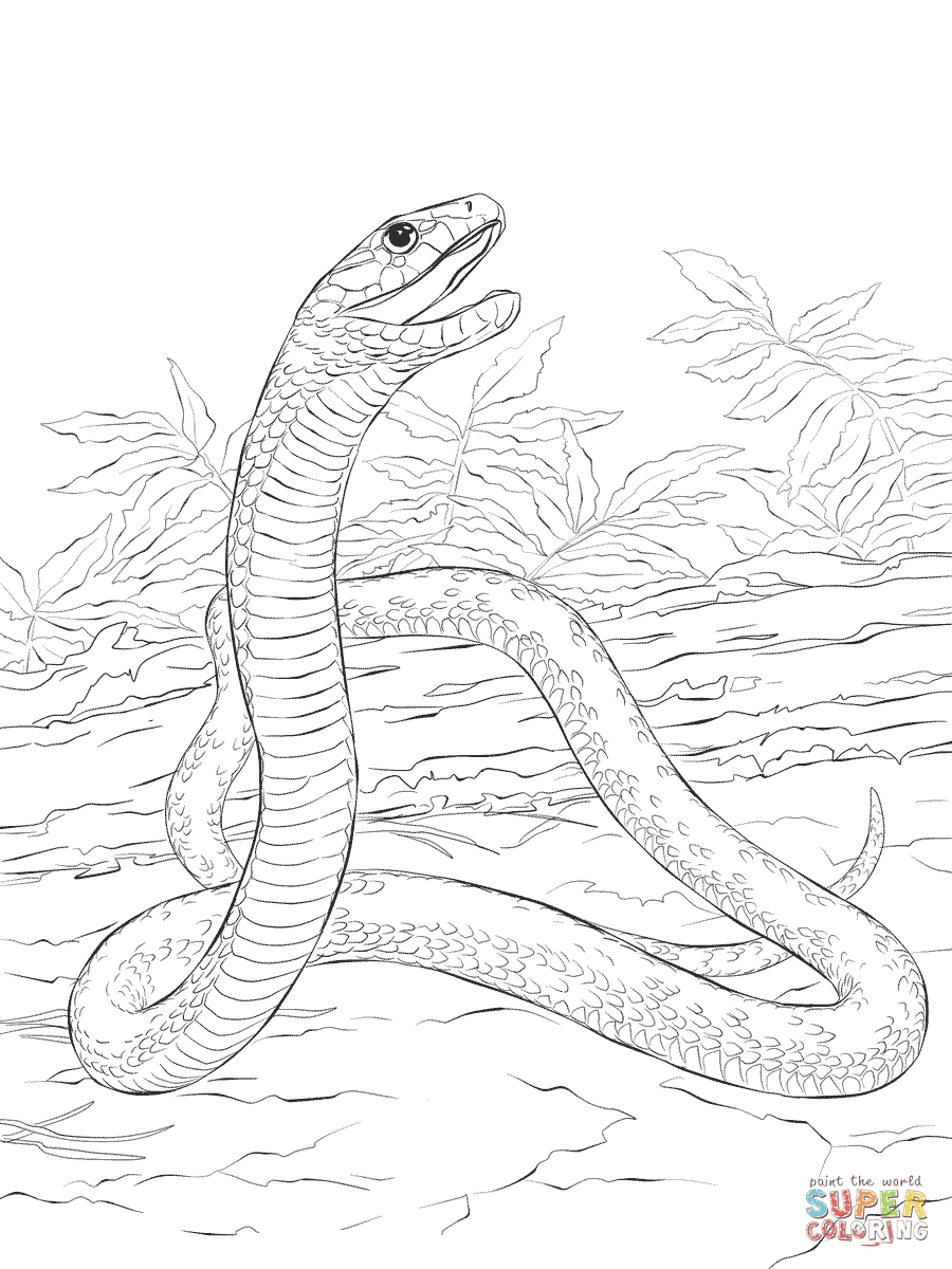 900x1200 Beautiful Ball Python Coloring Pages Photo