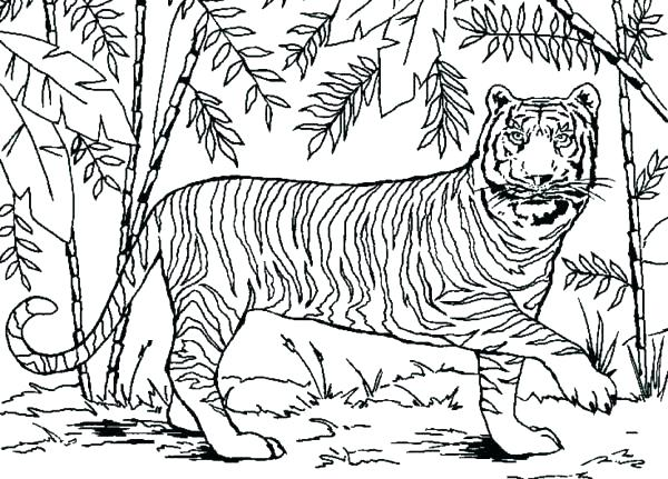 600x431 Forest Coloring Pages Coloring Pages Forest Forest Coloring Page