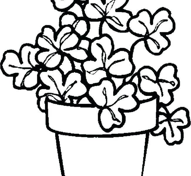 650x600 Plant Pictures To Color Plants Coloring Pages Printable Many Plant