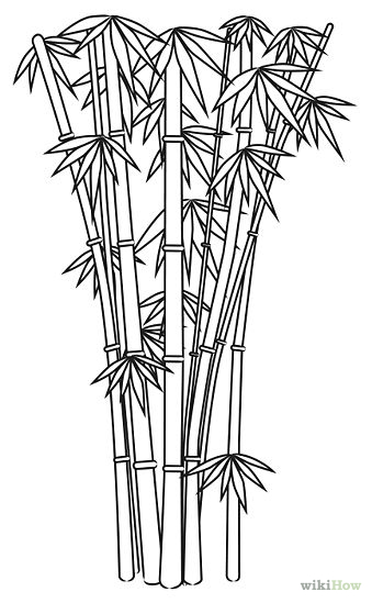 339x549 Draw Bamboo Cartoon