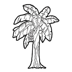 230x230 Coconut Tree Coloring Free Download