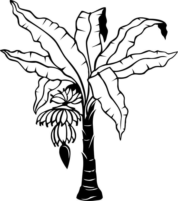 694x784 Banana Leaf Coloring Page Banana Tree Drawing Google Search