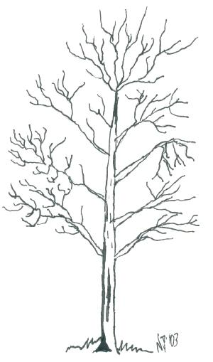 300x509 Bare Tree Coloring Page Tree Coloring Pages Fall Tree Coloring