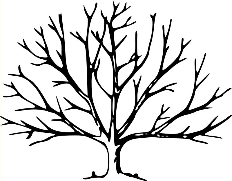 800x626 Bare Tree Coloring Page Bare Tree Template Free Download Clip Art