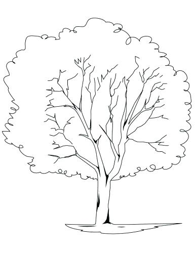 387x500 Coloring Page Bare Tree Coloring Page Trunk Bare Tree Coloring